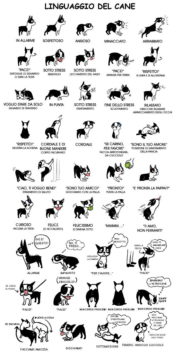 Home cazzulo luciano for Il linguaggio dei gatti